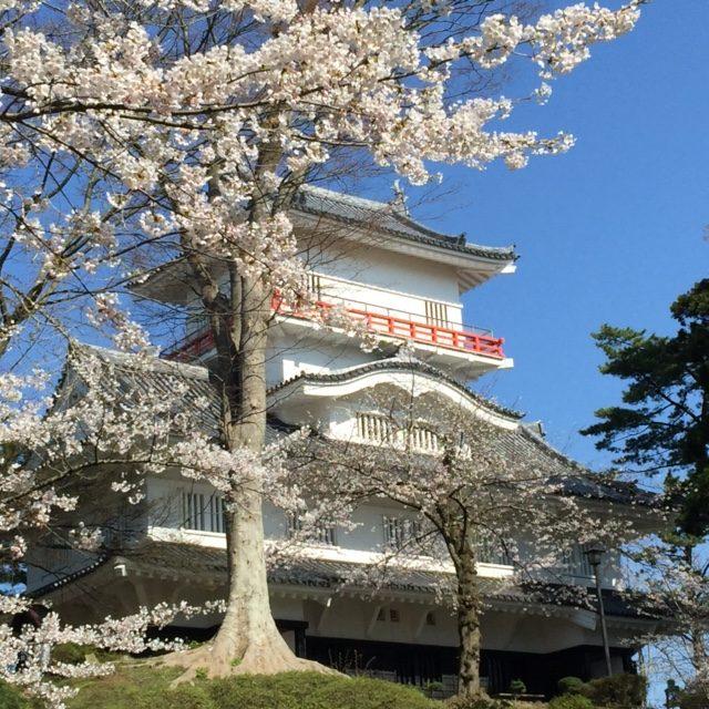 2017,千秋公園,桜
